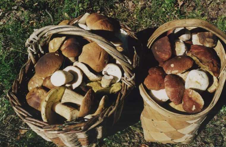 заплесневели маринованные грибы