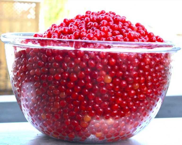 Варенье из калины красной: рецепт простой на зиму, с косточками и без, польза и вред, как сварить с яблоками, апельсином, вкусное