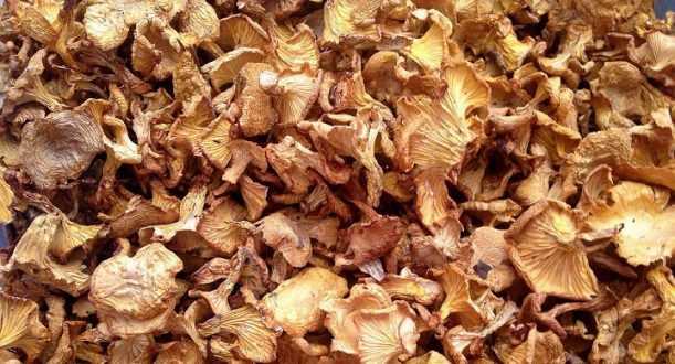 сушка грибов в духовке с конвекцией