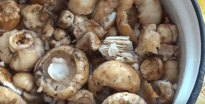 как солить бычки грибы чтобы были вкусные