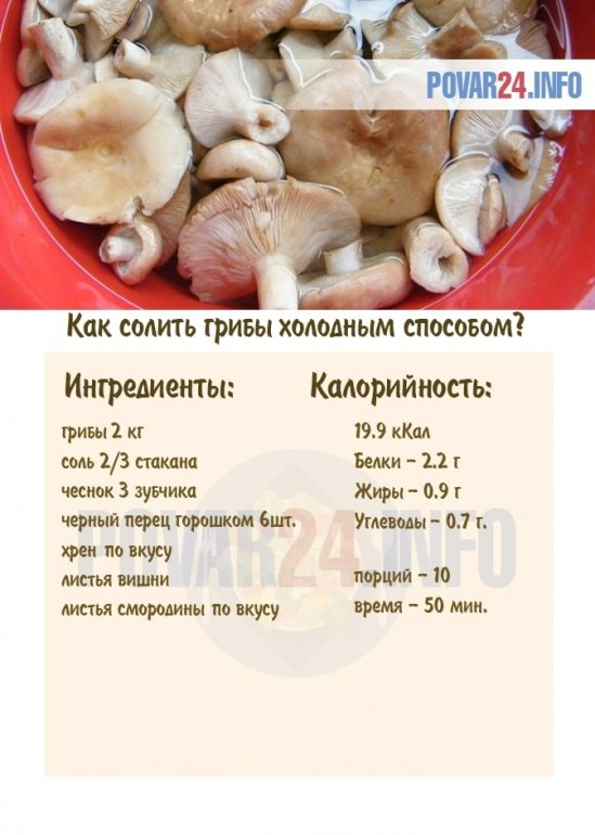 Как солить грибы в домашних условиях — пошаговый простой и быстрый рецепт в банках горячим и холодным способом